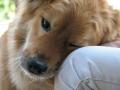 https://commons.wikimedia.org/wiki/File:Dog's_Love.jpg
